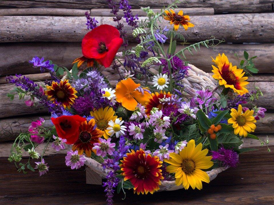 Las Flores Su Lenguaje Y Significado I